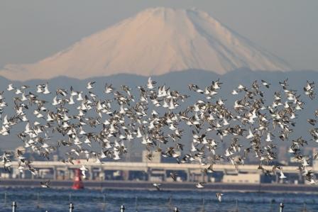 <b>富士山部門 入選</b>