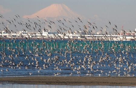 <b>富士山の部  入選-2</b>