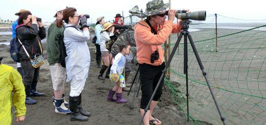 三番瀬探検隊「♪鳥くんと野鳥を探そう」