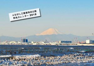 ふなばし三番瀬海浜公園「野鳥カレンダー2018」